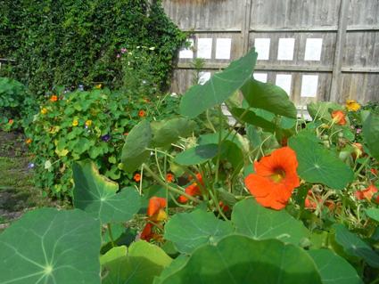 Gartenkultur